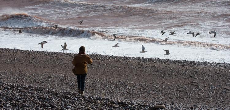 Woman, waves, gulls, shingle, beach