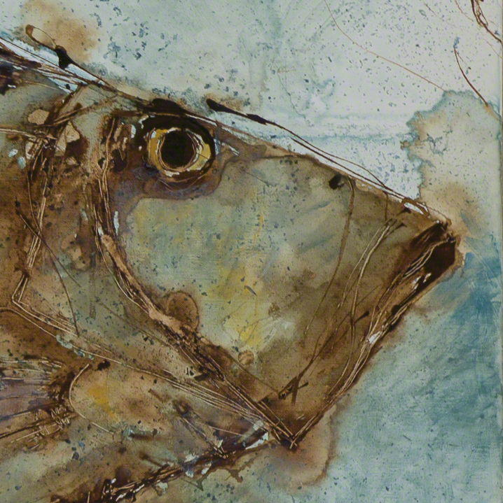 Face of fish, St Pierre, John Dory, Zeus Faber, in profile, against bluish background from painting by Catherine Forshall
