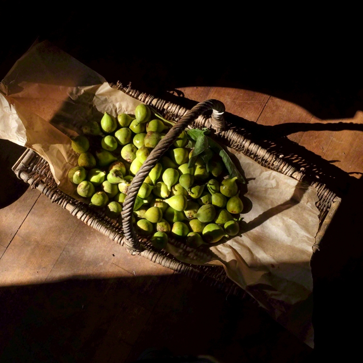 Green figs, basket, shadow, harvest, crop